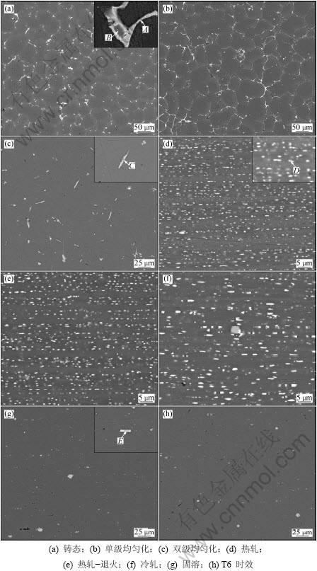 图1 Al-Zn-Mg-Sc-Zr合金SEM微观形貌-Al Zn Mg Sc Zr合金板材制备过